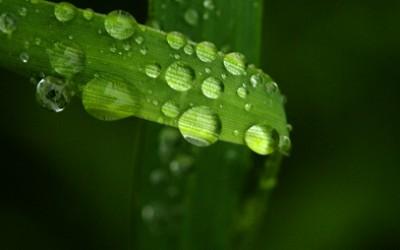 20071201142134flora_grass_800x600