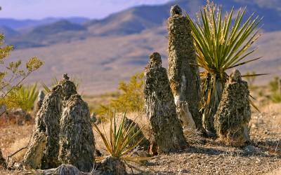 Nevada desert - Pilgrims
