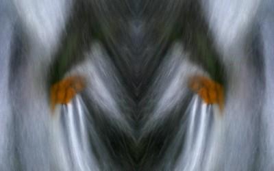 Creative - water 04
