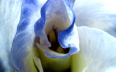 img_7934-blue-dark-small
