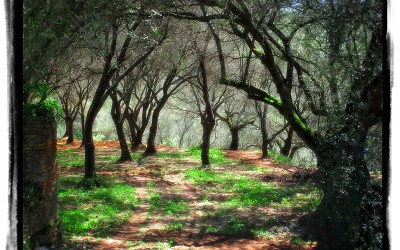 Almond Forest in Serra San Bruno